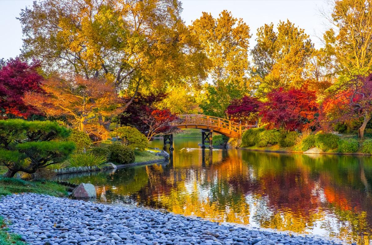 pond in a garden with autumn trees in St. Louis, Missouri
