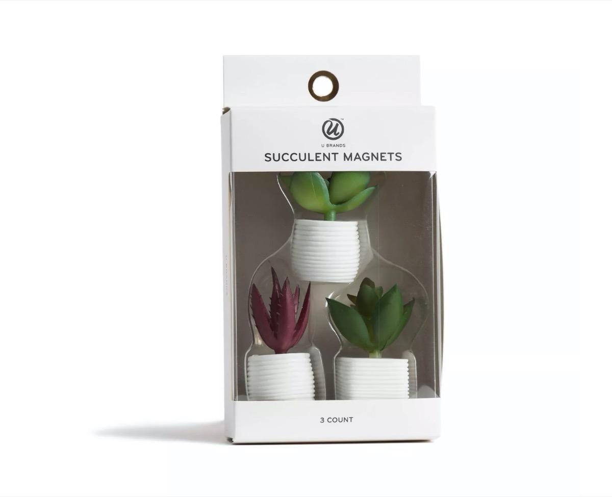mini faux succulent magnets