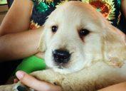Tarzan Camila Cabello and Shawn Mendes new puppy