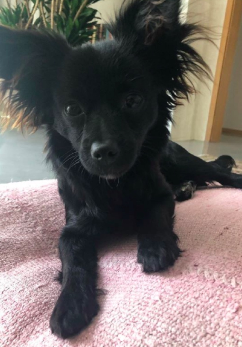 Sarah Paulson's new puppy Winnie