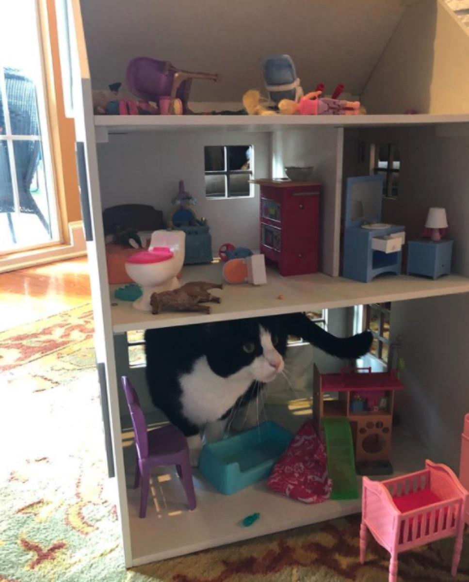 Angela Kinsey's cat in a dollhouse