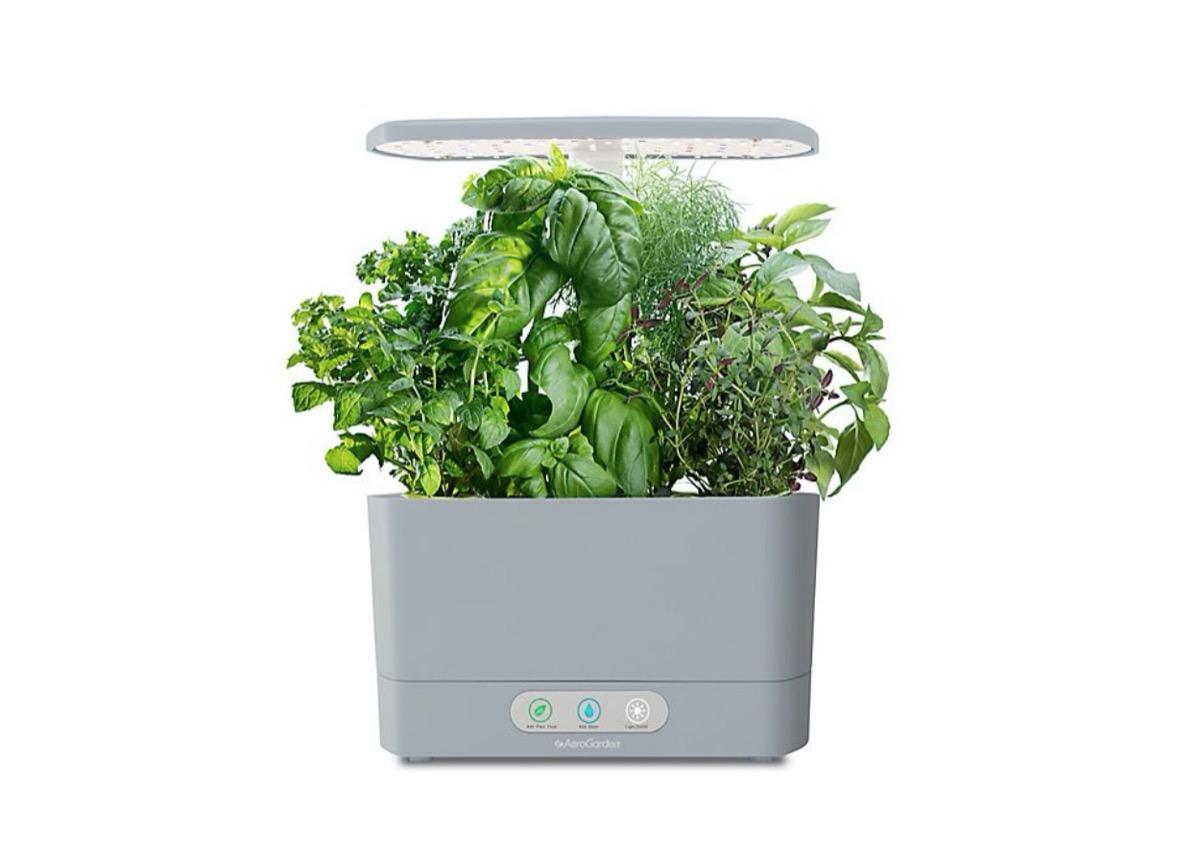 aerogarden planter full of herbs