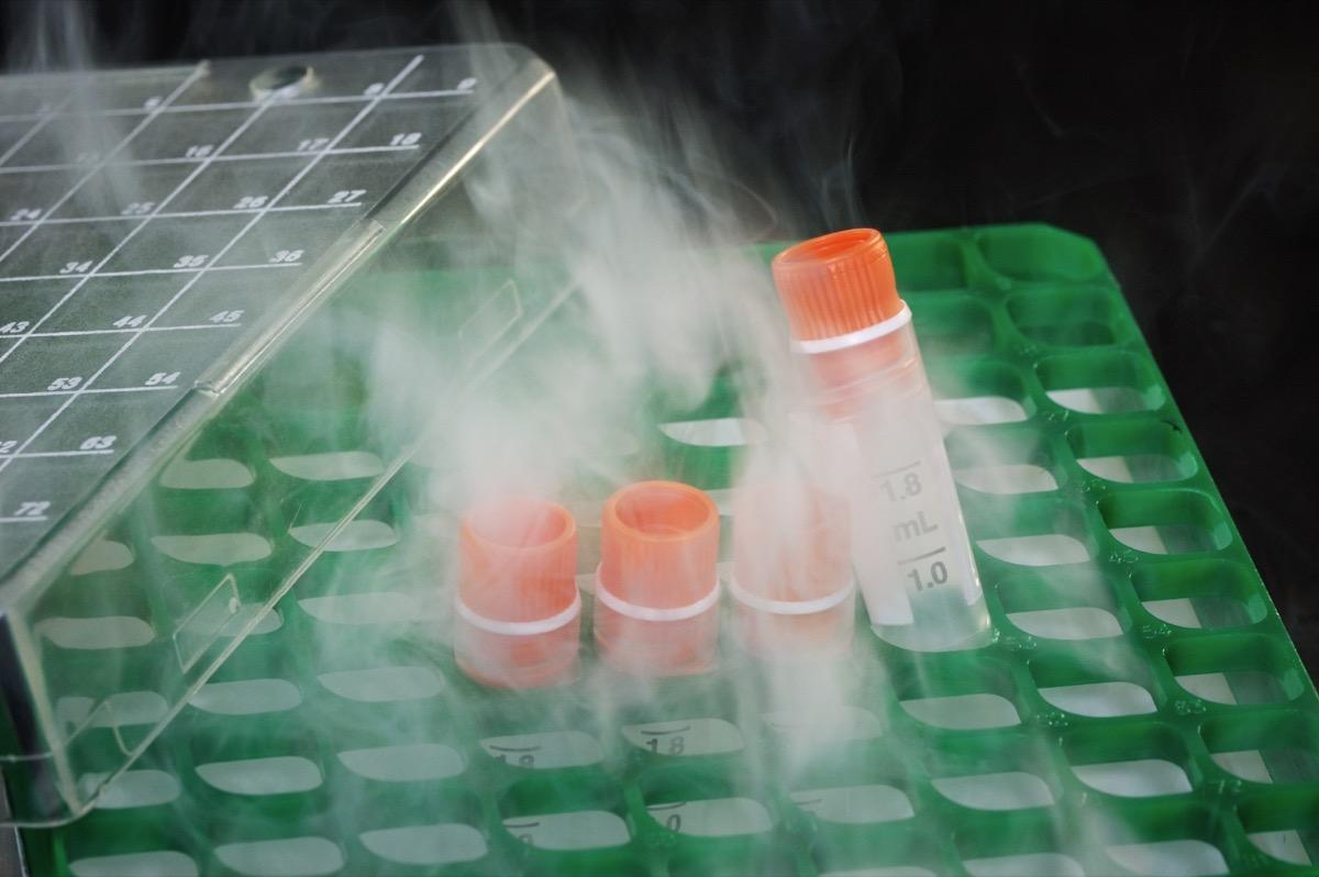 Four cryogenic tubes on a rack