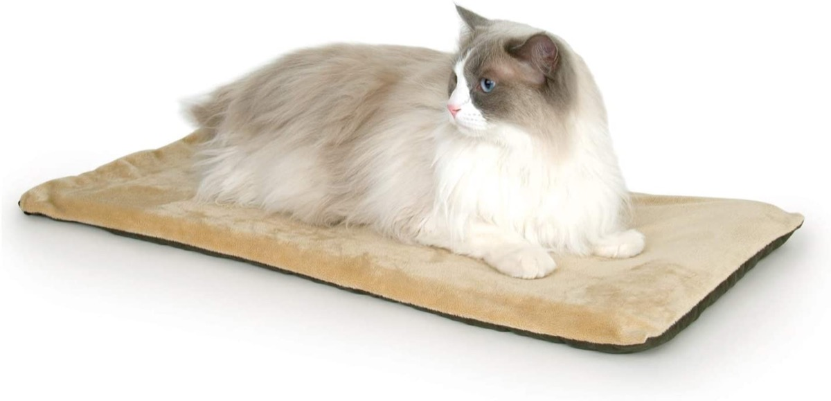 white and gray cat on tan bed