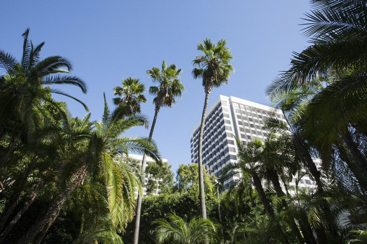 building and tress in downtown Irvine, California
