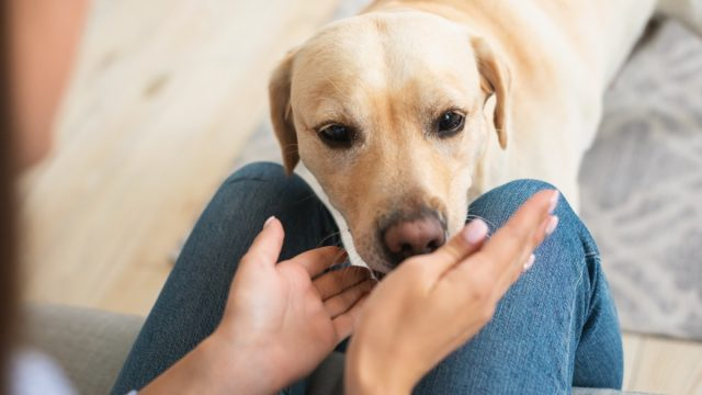 lab sniffing woman's hand