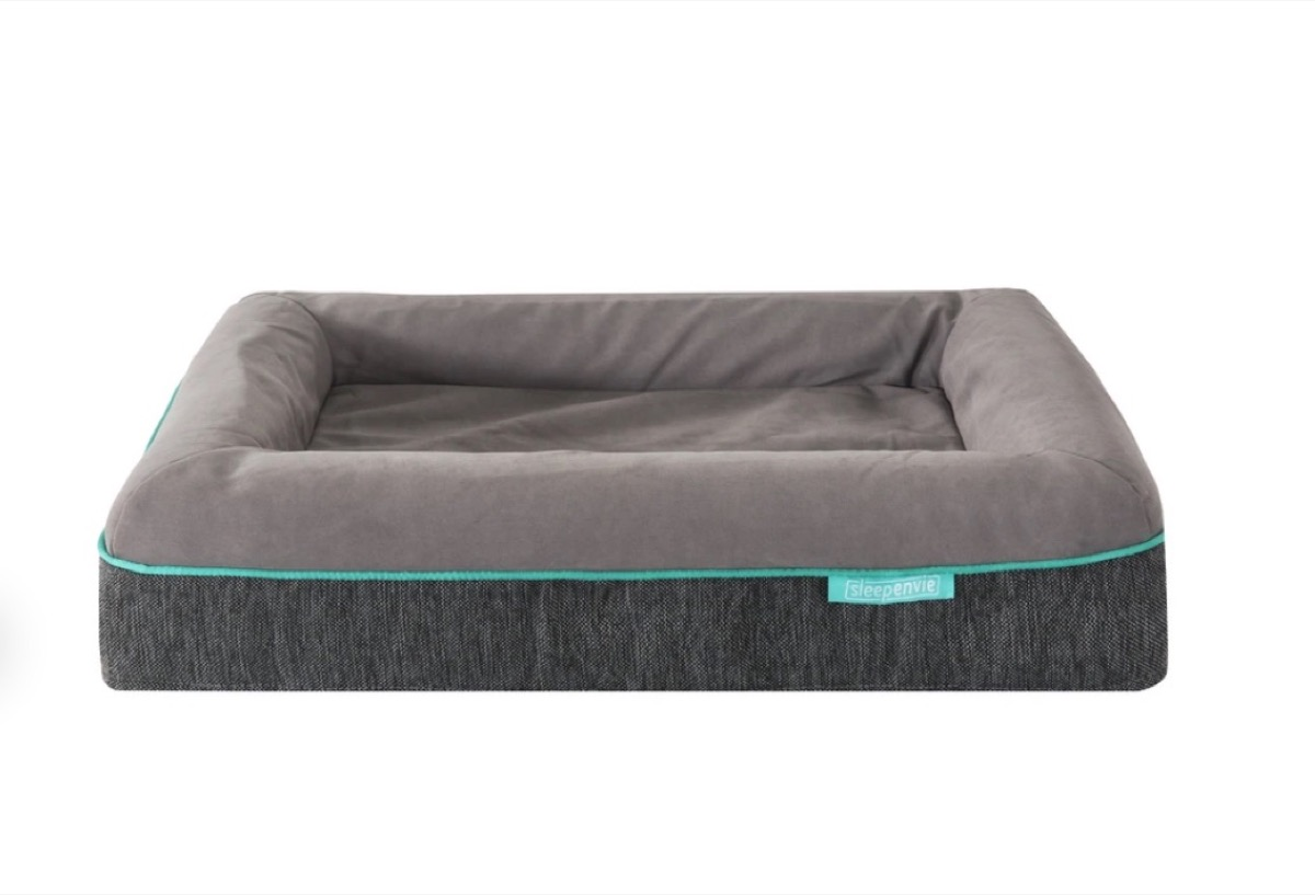 gray dog bed with green piping