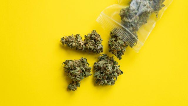 marijuana on yellow background