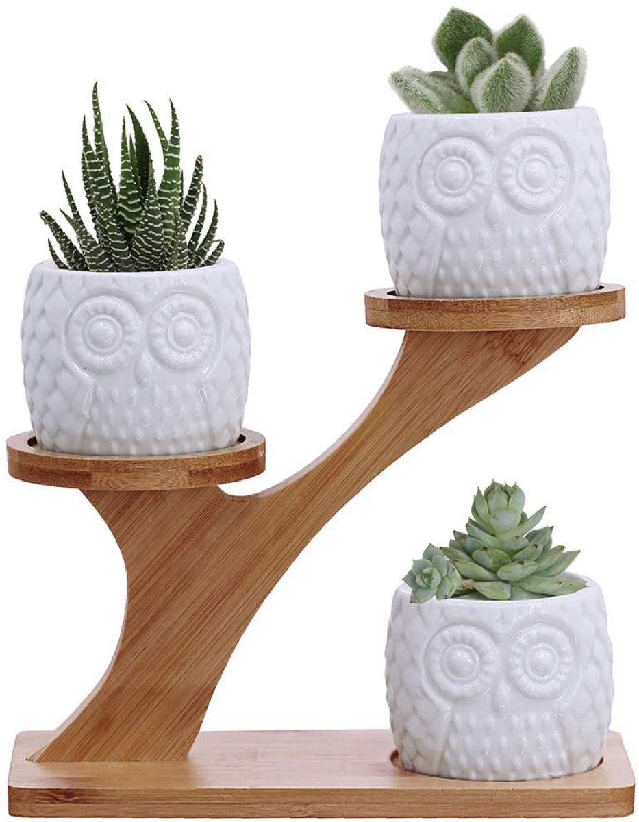 three white ceramic pots that look like owls with succulents in them