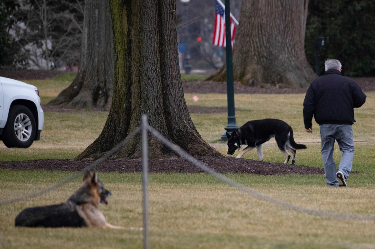 Major and Champ Biden on the White House lawn
