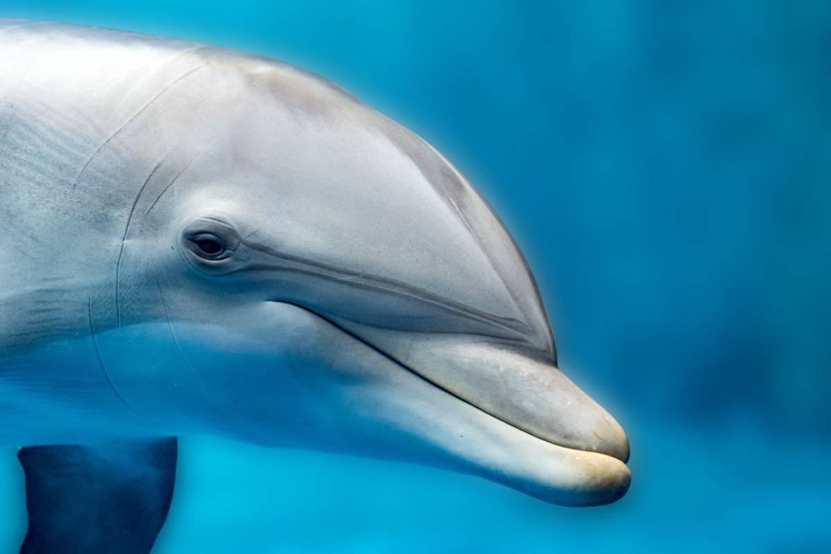 Dolphin side view