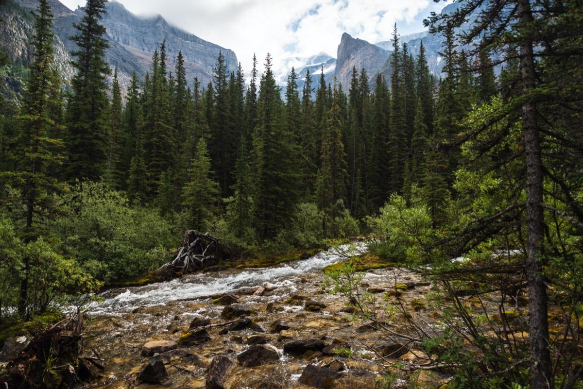 Forest in Alberta Canada