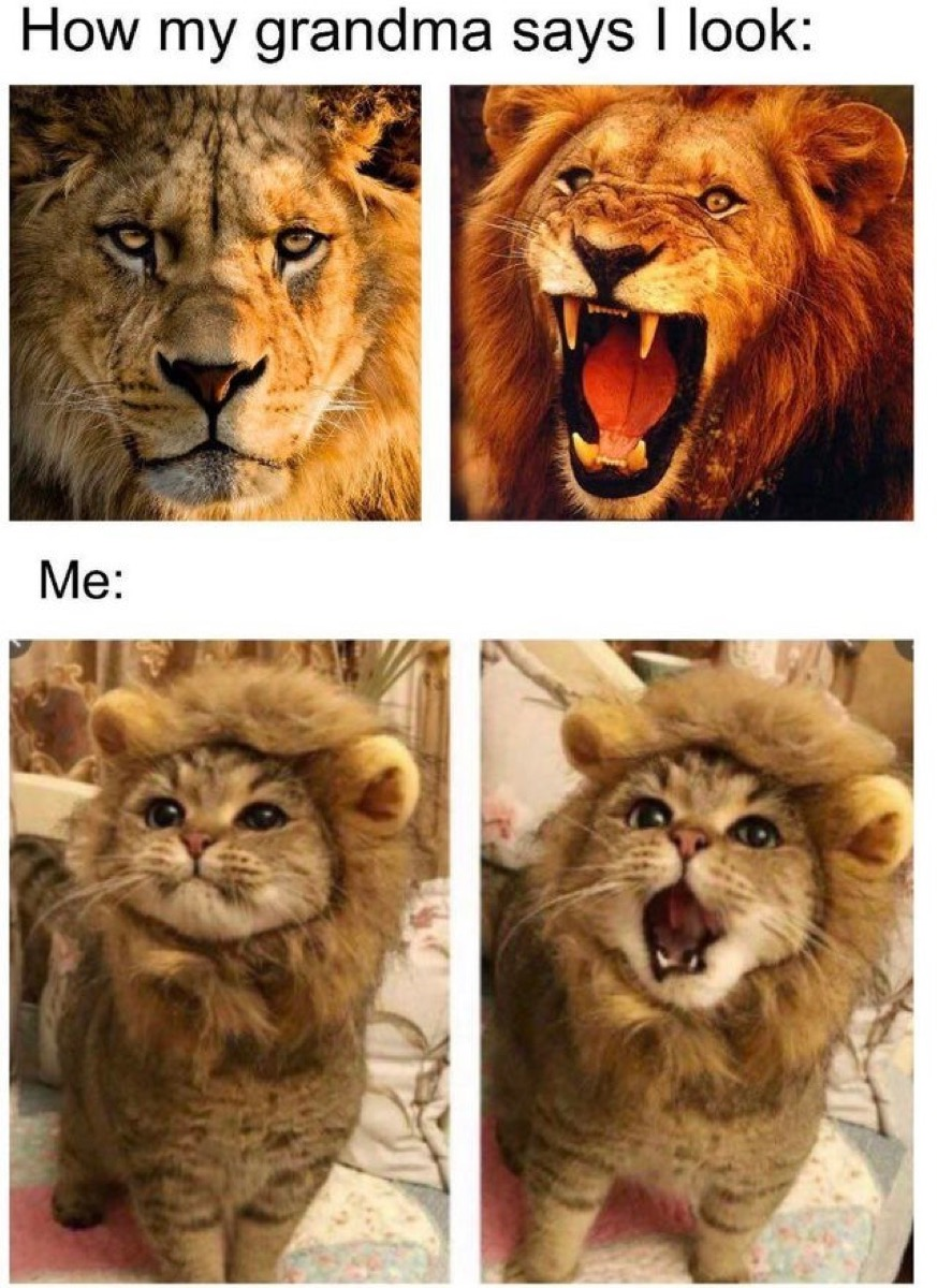 """Photos of real lions and photos of a kitten in a lion costume with the captions, """"How my grandma says I look"""" and """"me."""""""