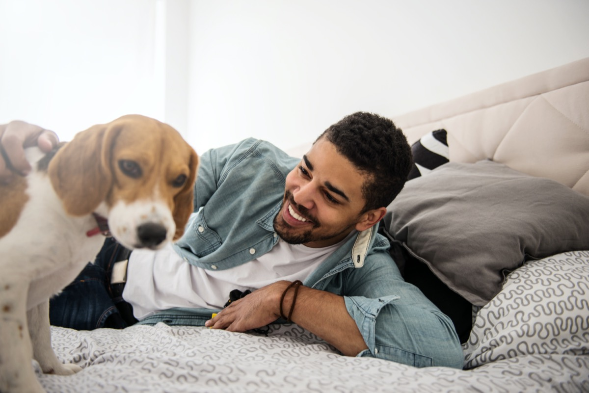 Young man with beagle puppy on bed