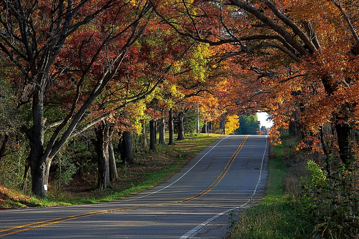 road and trees in Highland Park, Michigan