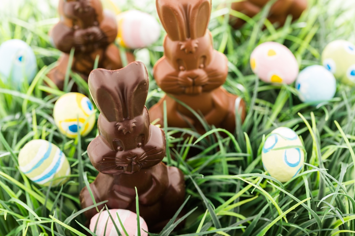 chocolate easter bunnies in grass