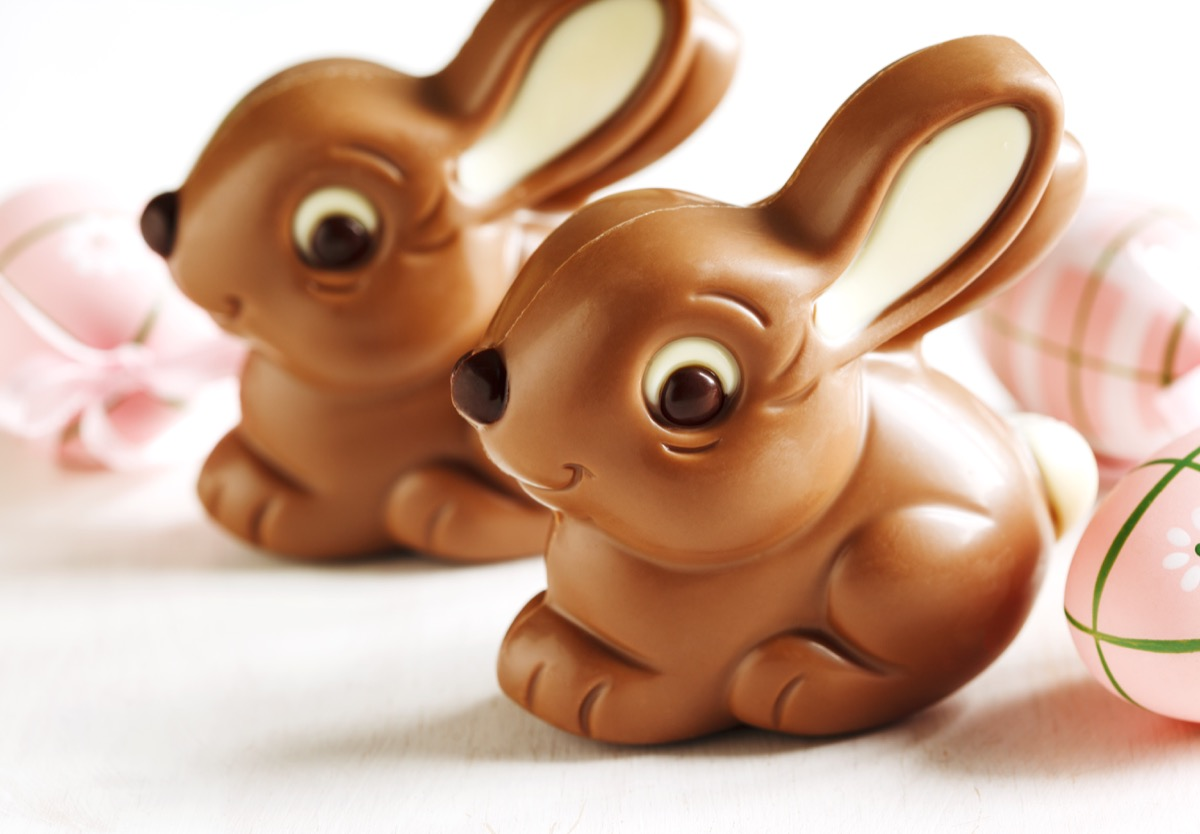 smiling chocolate bunnies, white background