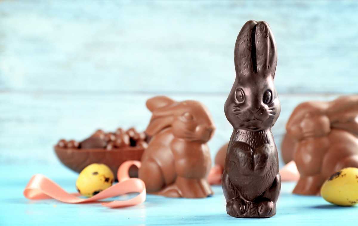 chocolate bunnies, easter candy, blue background