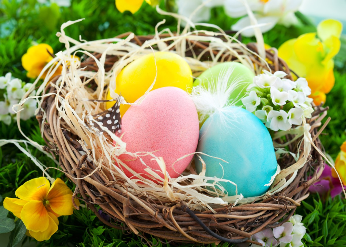 pastel colored easter eggs in nest