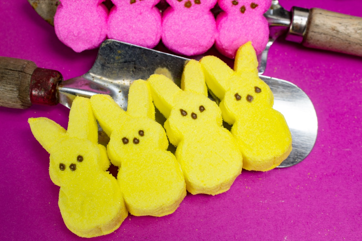 yellow, pink peeps, easter candy