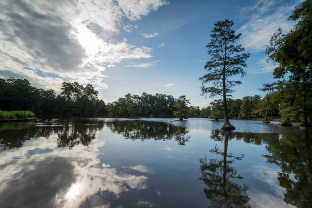 A lake in Sumter, South Carolina, which is a town near Lake City, SC