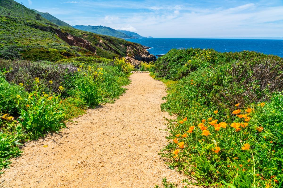 Beach in Northern California