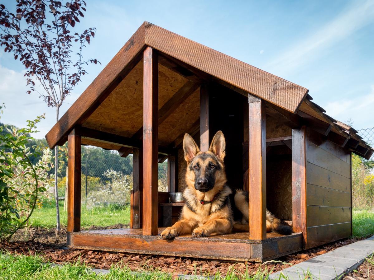wooden dog house, german shepherd sitting inside dog house