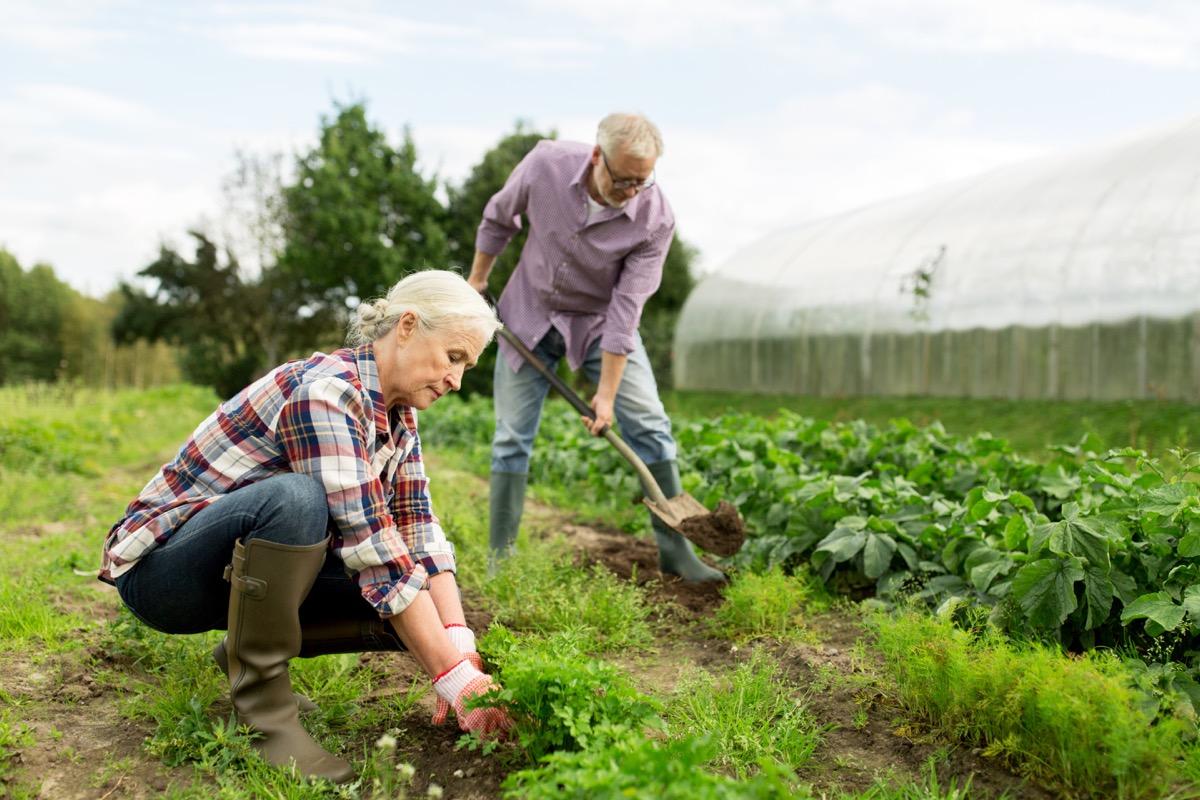 Couple gardening