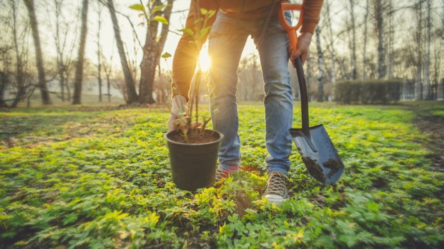 Person gardening in spring