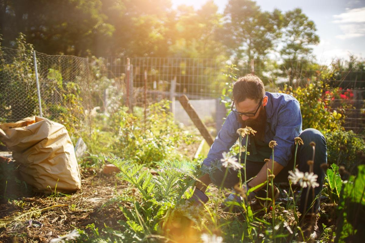 man planting, gardening, bending down in a garden