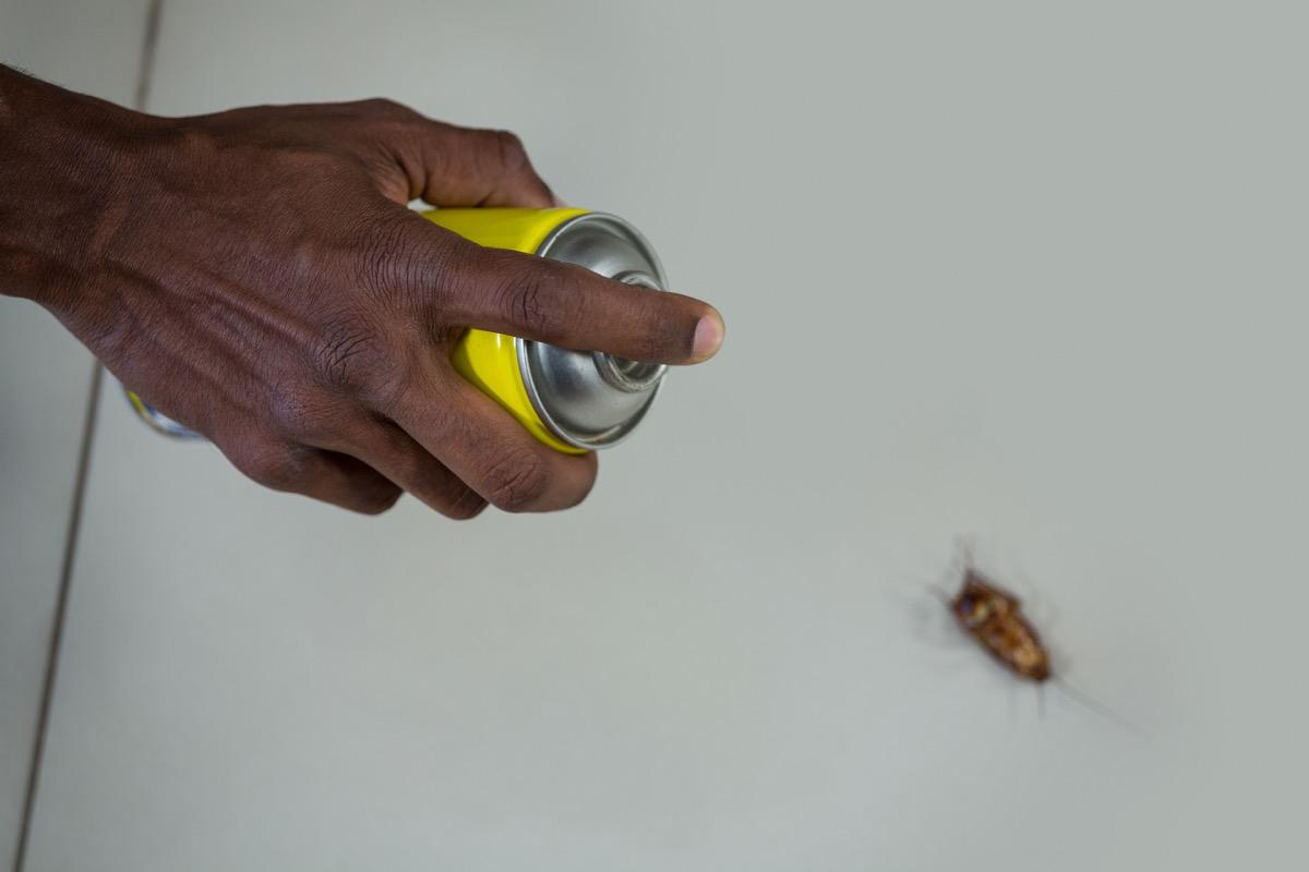 Man killing cockroach with spray