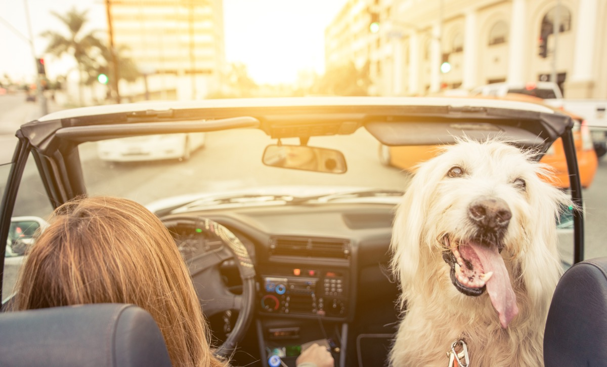 Woman driving with dog