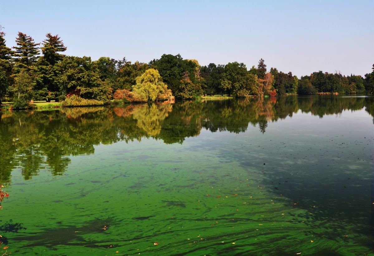 lake with blue-green algae bloom