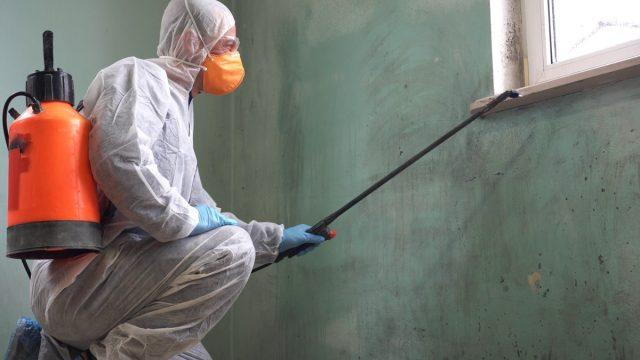 exterminator spraying pesticide inside home