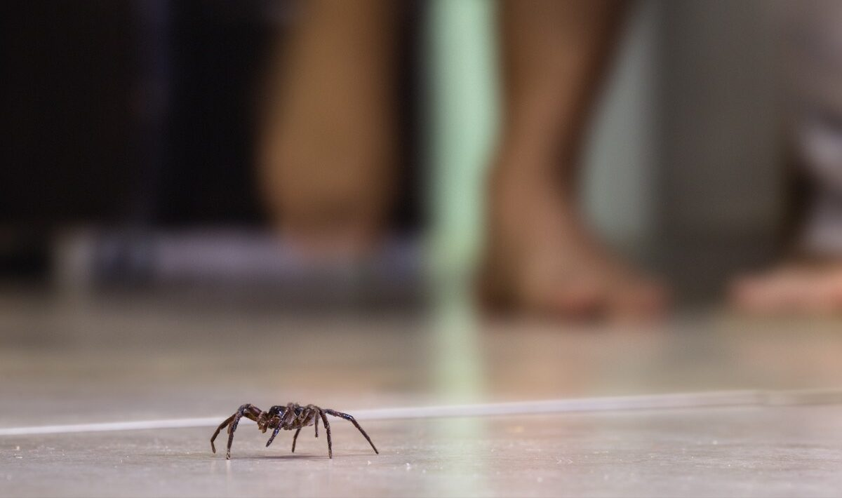spider on tile floor
