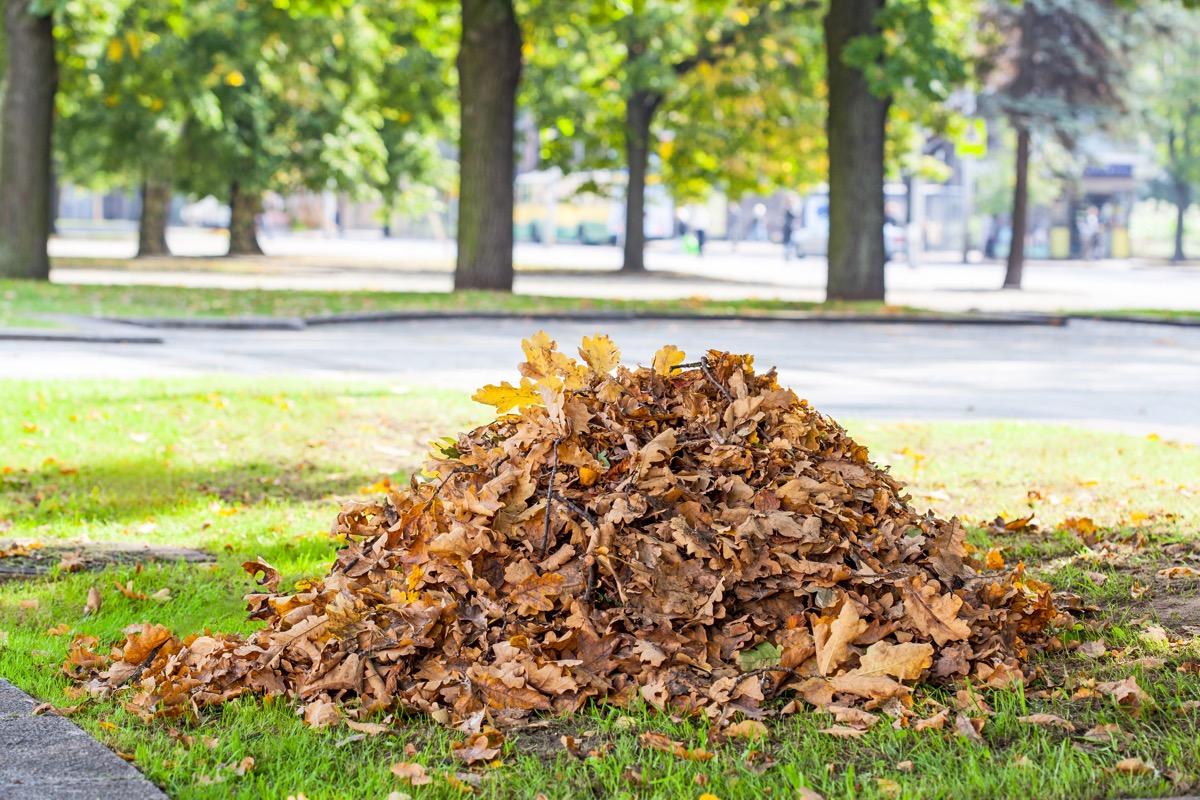 pile of dry leaves in yard