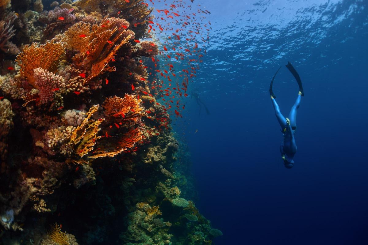 Freediver swimming near coral reef