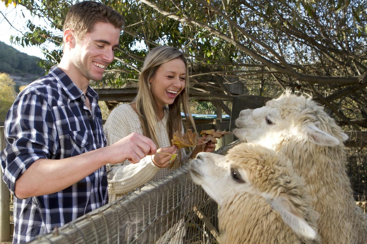 Couple on zoo date