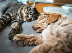 A cat and puppy dog sleeping next to each other on a couch