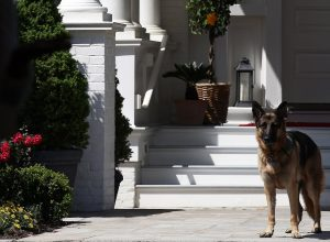 Joe Biden's dog, Champ, listens to speakers during a Joining Forces service event at the Vice PresidentÕs residence at the Naval Observatory May 10, 2012 in Washington, DC.