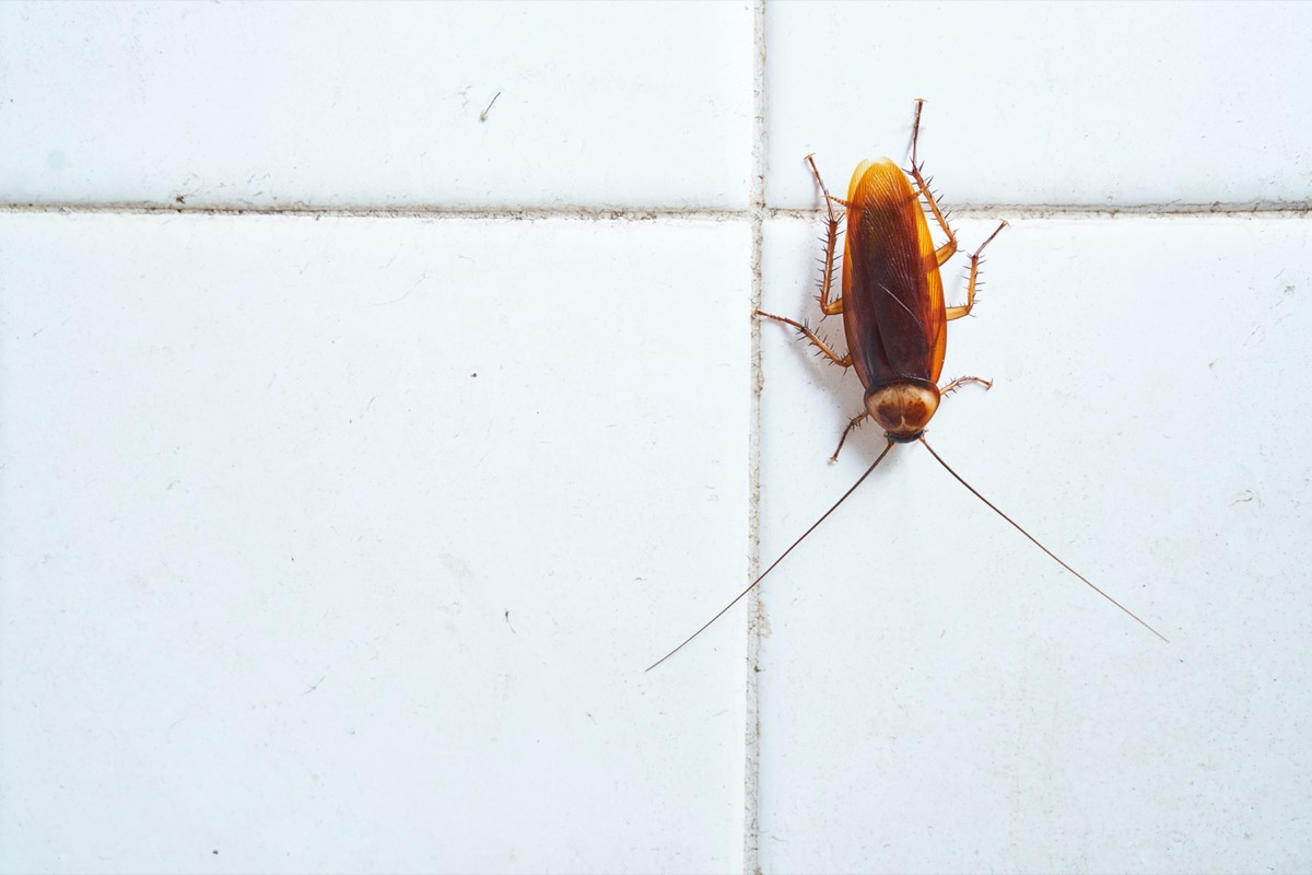 cockroach on white tile wall