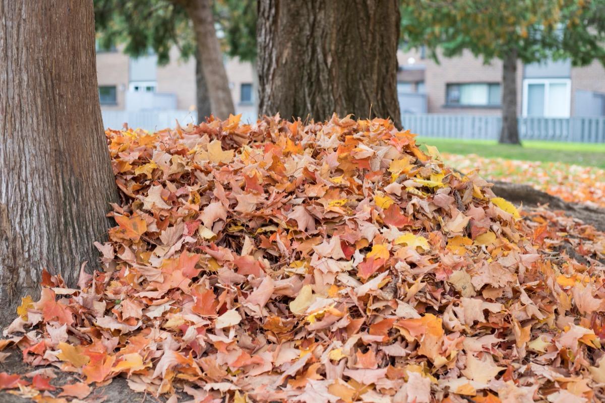 leaf pile in yard