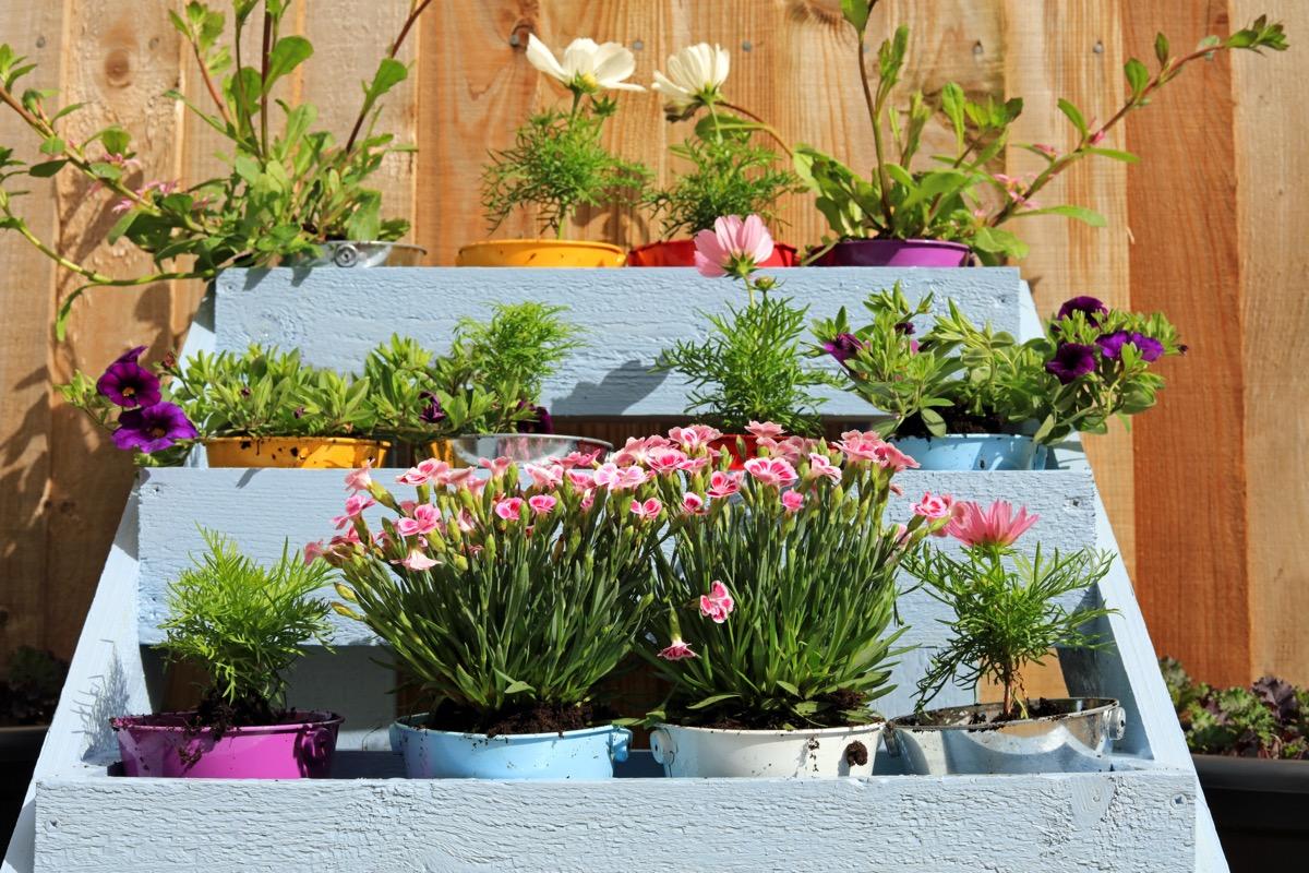 flowers in pots in tiered wooden rack