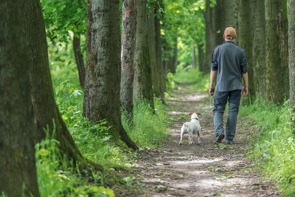 Man walking dog in woods
