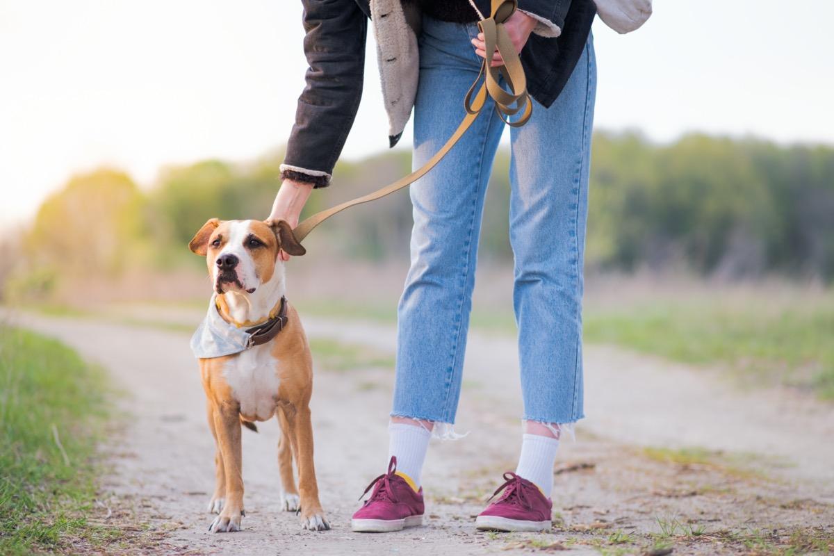 Owner walking dog