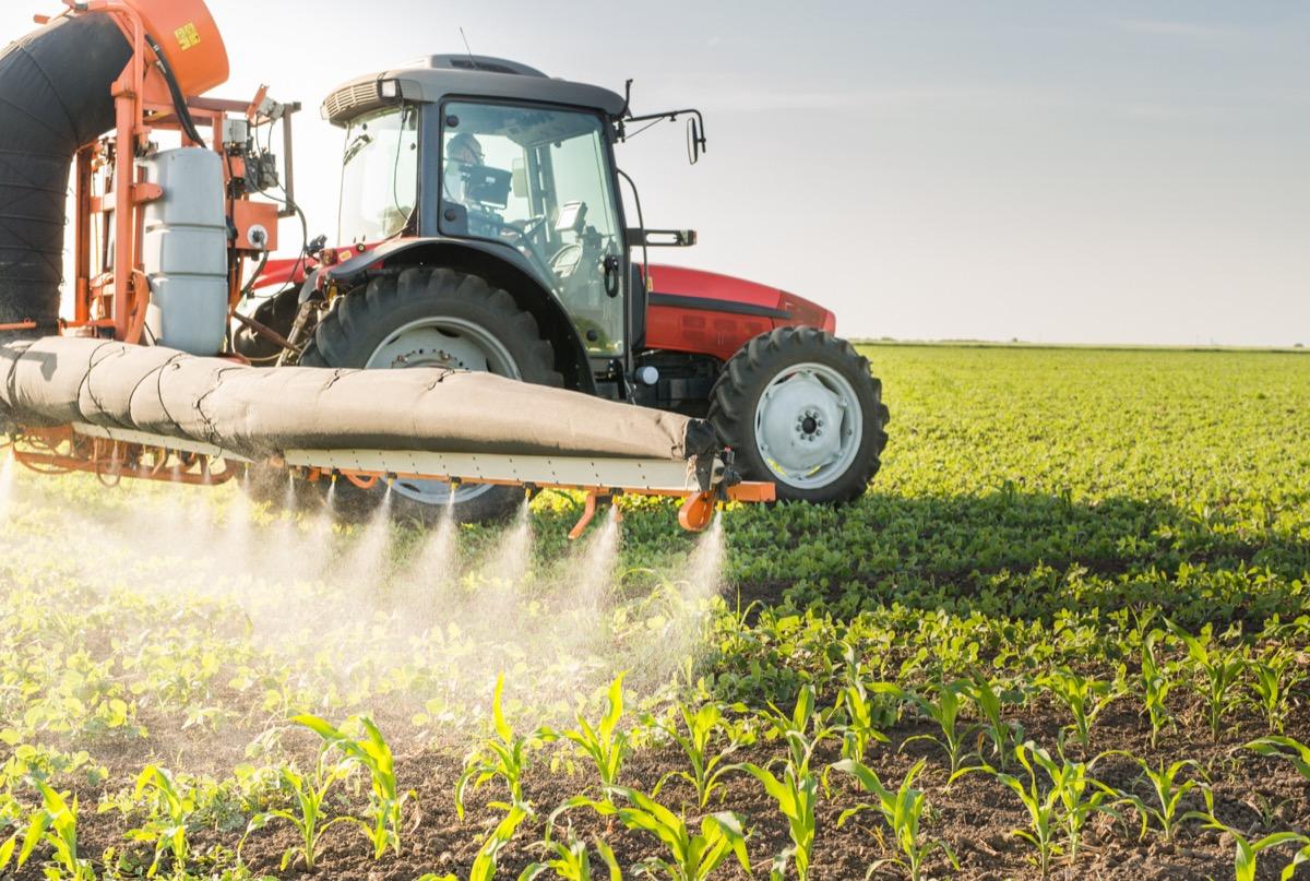 Spraying farm with pesticides