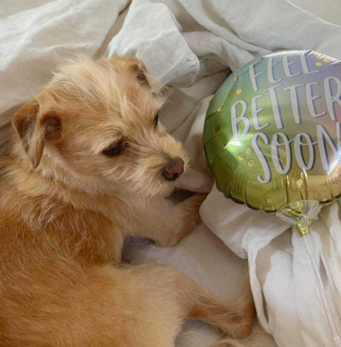 Catt Sadler's dog and balloon