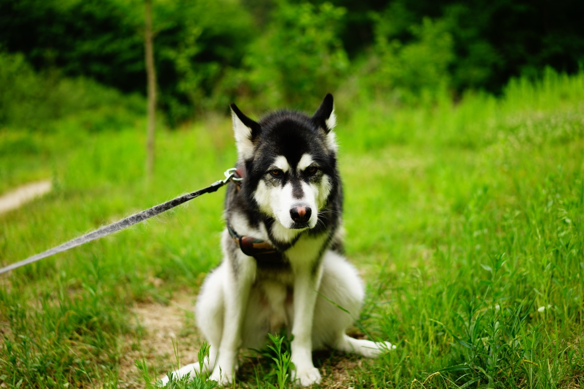 Seekor anjing menatap rumput