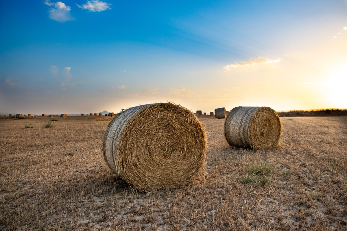 bales of hay on a farm