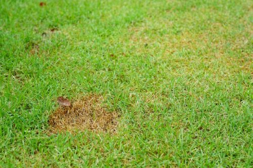 Green grass and Dried Grass background